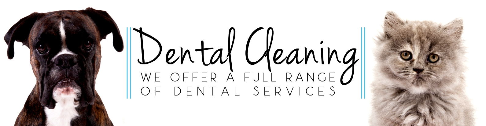 image of dental cleaning banner
